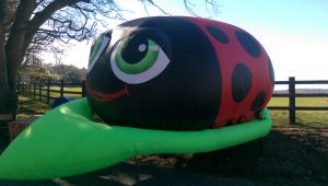 Inflatable lady bird. inflatables, inflatable art